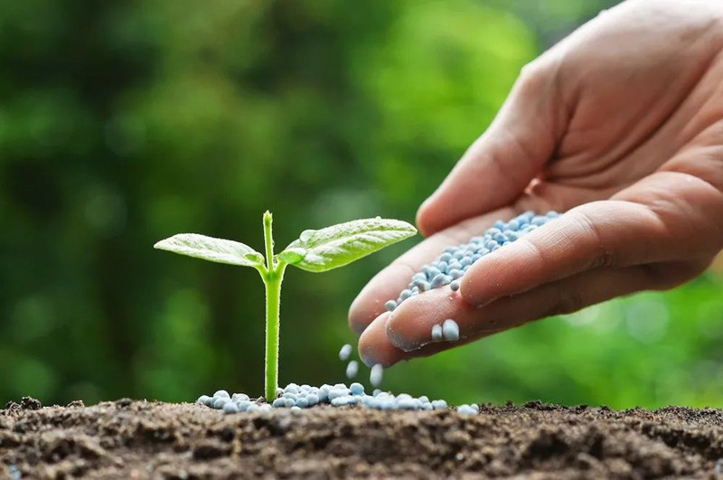 蔬菜如何巧施肥
