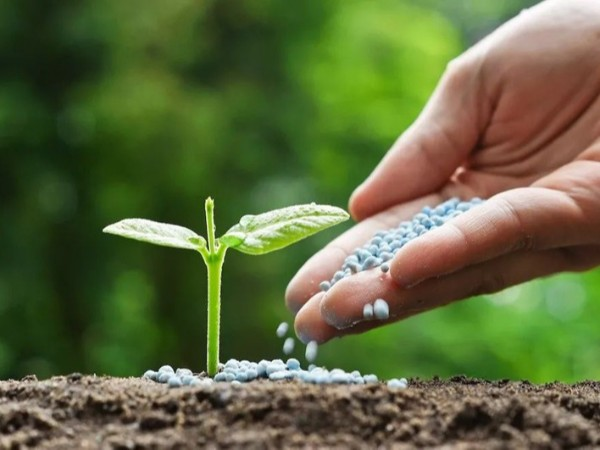蔬菜如何巧施肥?