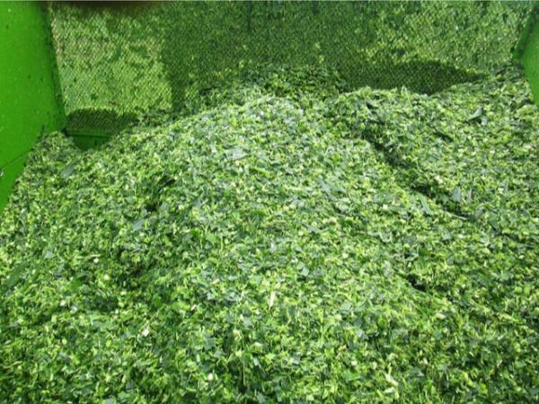 丙酸类防霉保鲜添加剂在青贮饲料上的应用研究进展!
