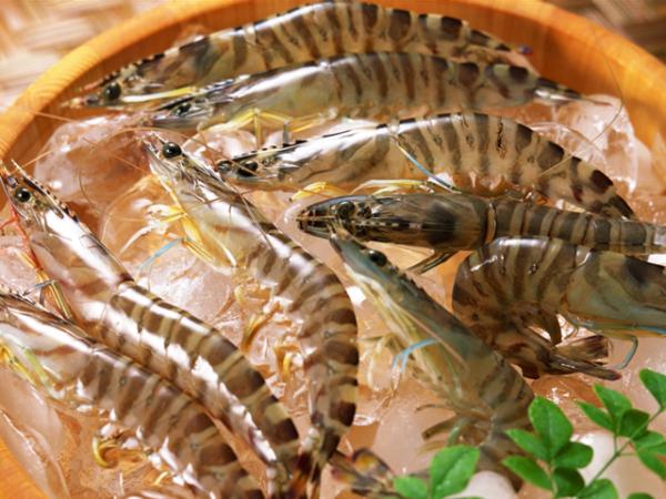 水产养殖丨对虾蜕壳不遂问题